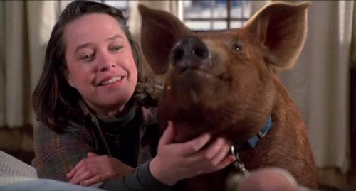 misery-pig