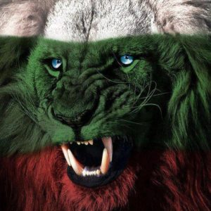lion three colors